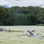 平成28年 福島町千軒地区・千軒そばの花鑑賞会
