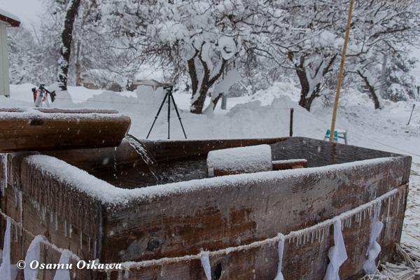 平成29年 木古内町 佐女川神社 寒中みそぎ祭 水垢離の桶